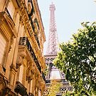 Paris View by Damien Mountain Woods