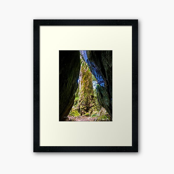 Arctic beech tree from a cave Framed Art Print