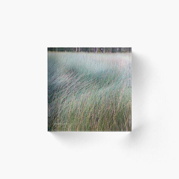 Textural sedge Acrylic Block