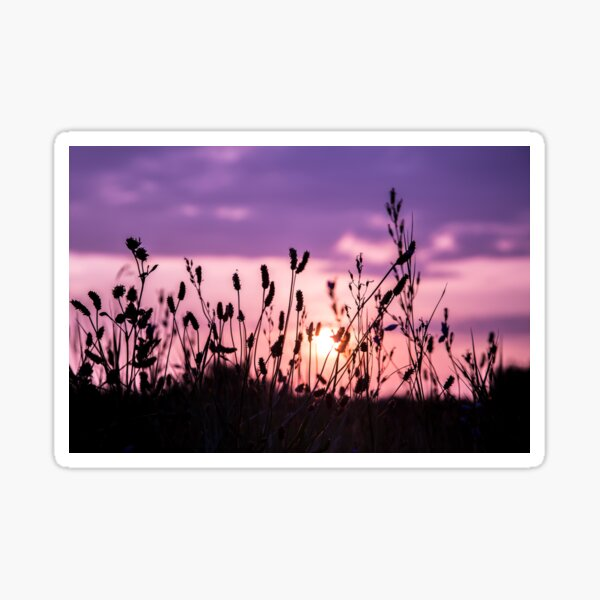 Sunset and silhouettes Sticker