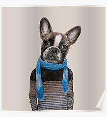 cute french bulldog in sweater Poster