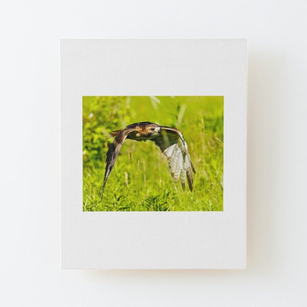 Red-tailed Hawk Wood Mounted Print