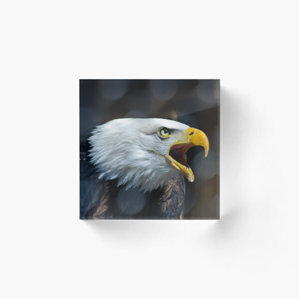 Screaming Bald Eagle Acrylic Block