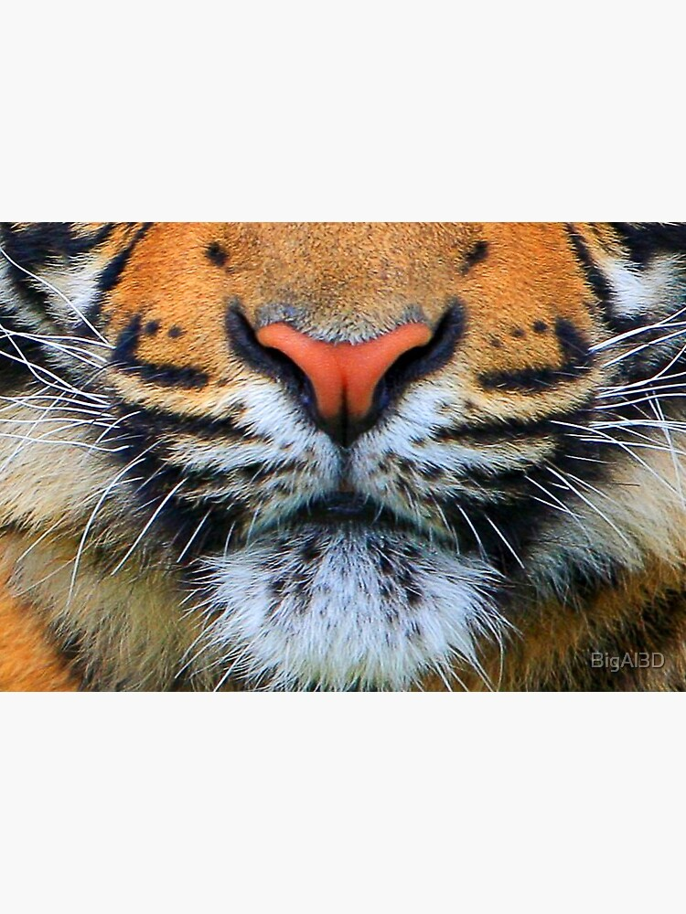 Wild Tiger Face Mask by BigAl3D