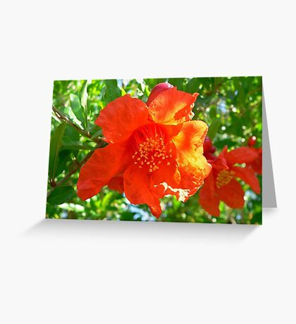 Scarlet Punica Granatum Flower Greeting Card
