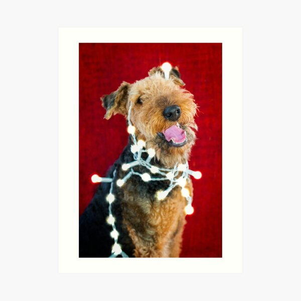 Christmas Decoration Gone Wrong - Airedale Terrier Art Print