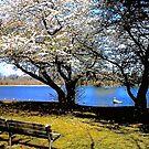 Spring Break ! by Nancy Richard