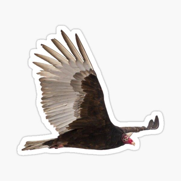Isolated Turkey Vulture 2014-1 Sticker