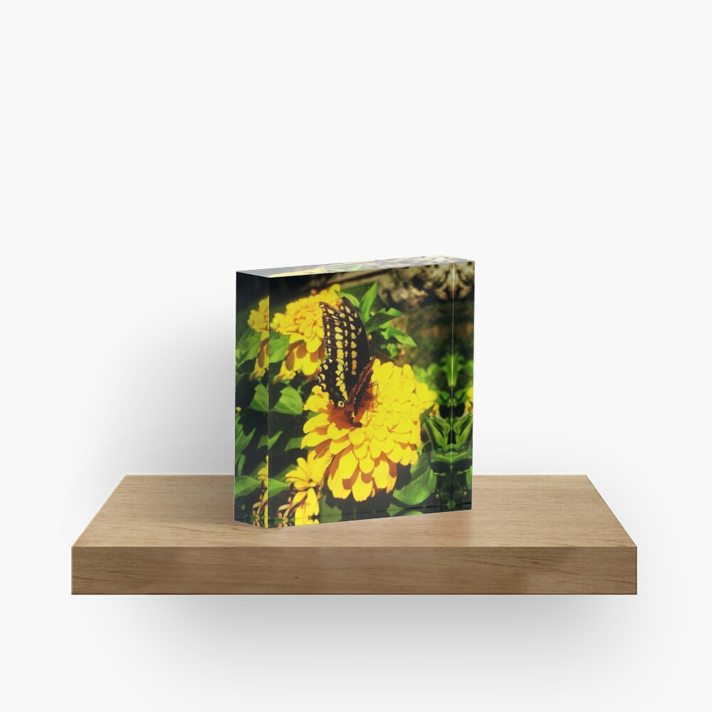 Yellow butterfly by Yannis Lobaina Acrylic Block
