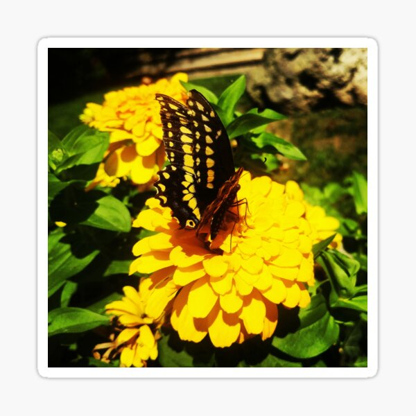 Yellow butterfly by Yannis Lobaina Sticker