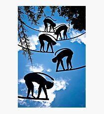 Sky Monkeys Photographic Print
