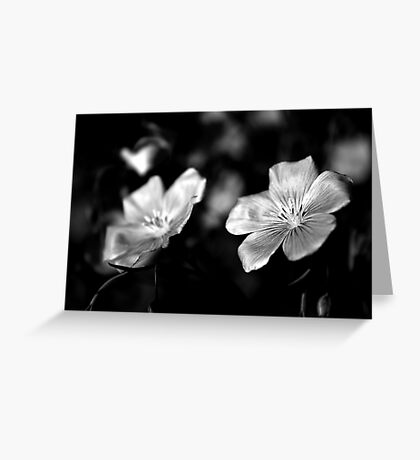 Delicate in Mono Greeting Card