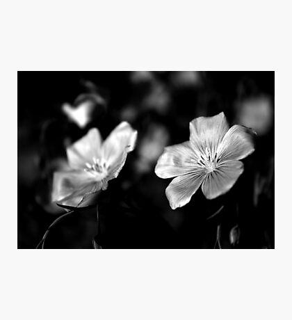 Delicate in Mono Photographic Print