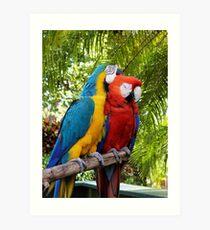 Love Birds Pair of Macaws Cuddling Art Print