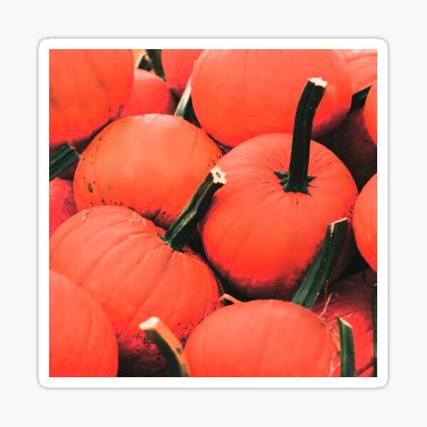 Pumpkins for Halloween Sticker