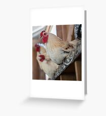 Roosting Hen Greeting Card