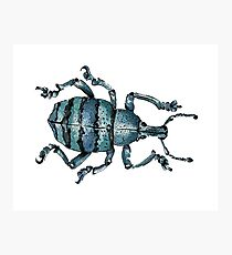 Blue Insect Photographic Print