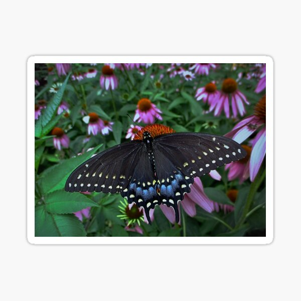 Black Swallowtail Butterfly  before flying in search of sun By Yannis Lobaina Sticker