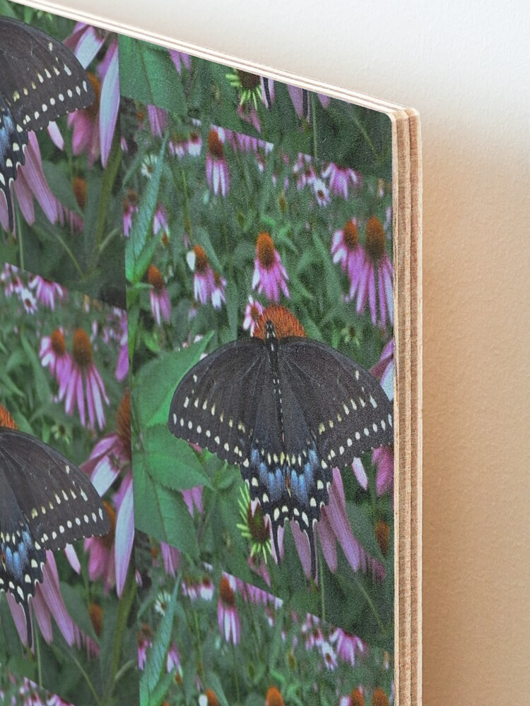 Alternate view of Black Swallowtail Butterfly  before flying in search of sun By Yannis Lobaina Mounted Print