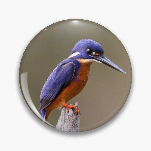 Azure Kingfisher  Pin