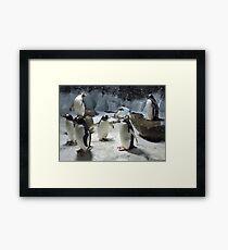 Gentle Gentoos  Framed Print