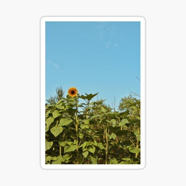 First Bloom Sticker