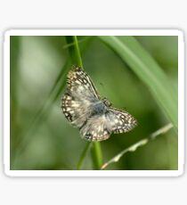 Tropical Checkered Skipper Butterfly Sticker