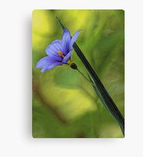 --Blue-Eyed Grass Canvas Print