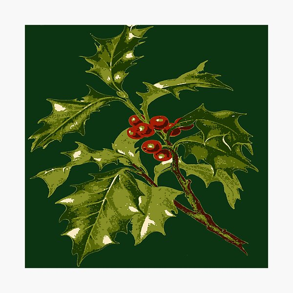 Sprig of Holly Christmas Red Berry Photographic Print