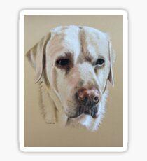 Bailey the sweet faced golden Labrador Sticker