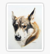 Olly - the beautiful Husky cross Sticker