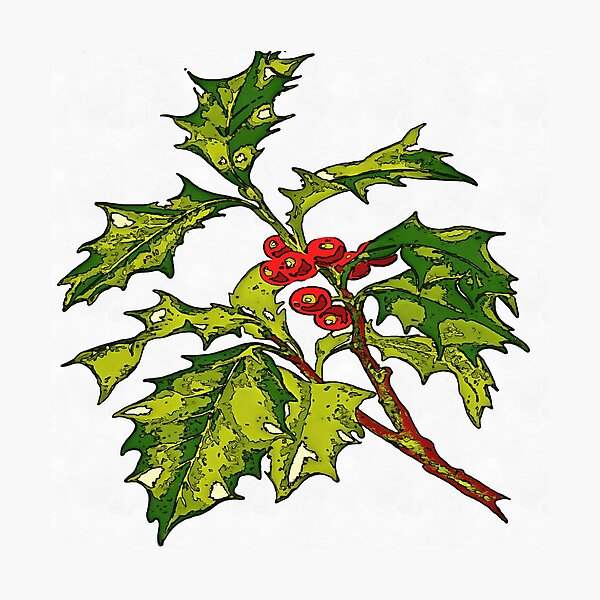 Black Outline Art Of Christmas Holly Photographic Print