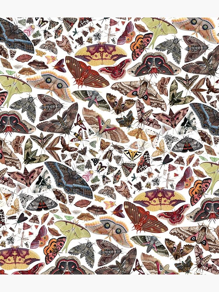 Moths of North America Pattern by JadaFitch