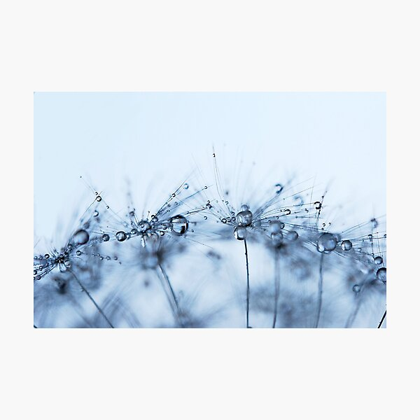From Outer Space - Dandelion Droplets Photographic Print