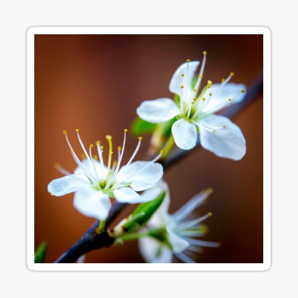 Spring Flowers Sticker