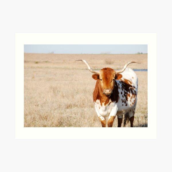 Kansas Longhorn in Pasture Art Print