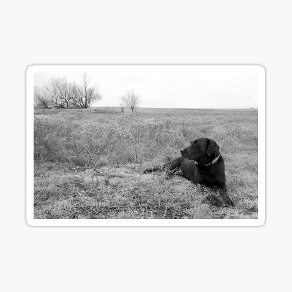 Labrador Dog in Field Sticker