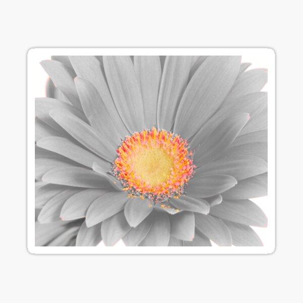 Gerbera Daisy with Yellow Center Sticker