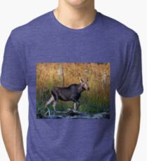 Maine Moose, yearling bull Tri-blend T-Shirt
