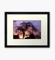 Sunset Willow Framed Print