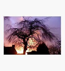 Sunset Willow Photographic Print