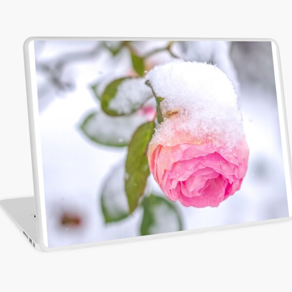 Snow on a Rose in Winter Laptop Skin