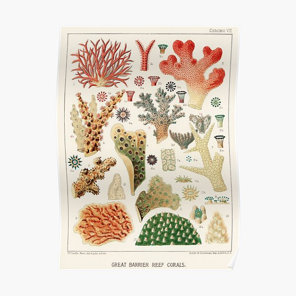 Great Barrier Reef Corals from The Great Barrier Reef of Australia (1893) by William Saville-Kent Poster