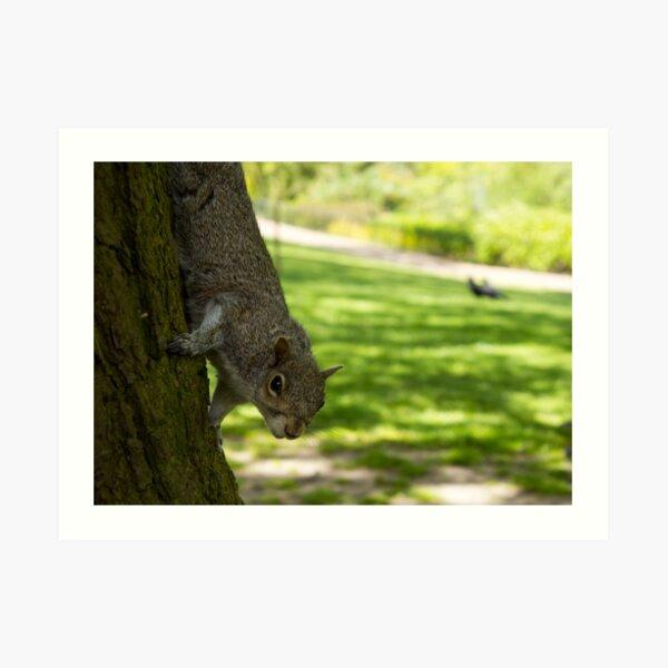 Cheeky Climbing Squirrel Art Print