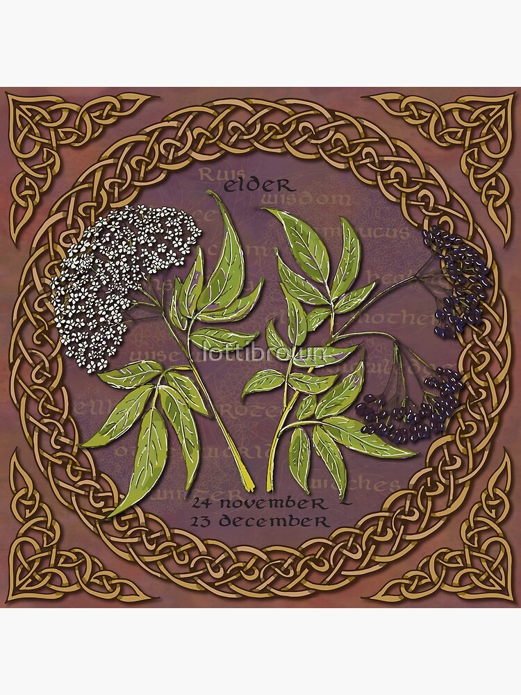 Celtic Tree Calendar Elder by lottibrown