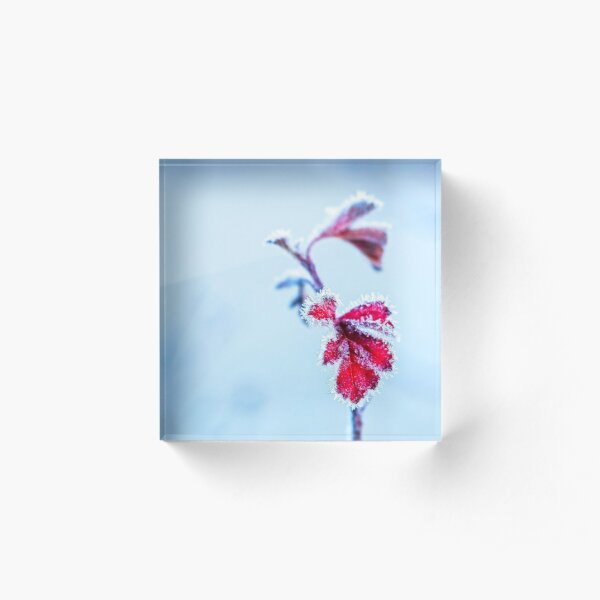 Frosty Red Leaves Acrylic Block