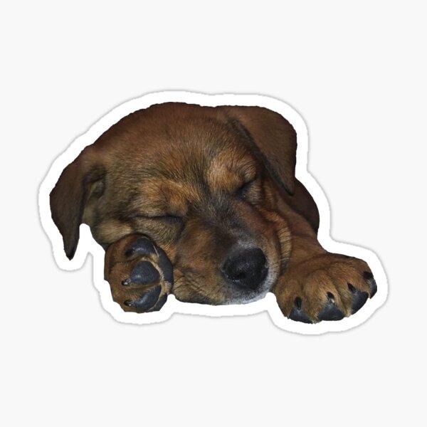 Australian Shepherd/Cattle Dog Mix Sticker