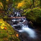 Surrounded by Autumn by DawsonImages