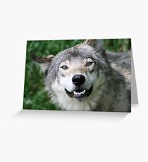 Loup gris Greeting Card