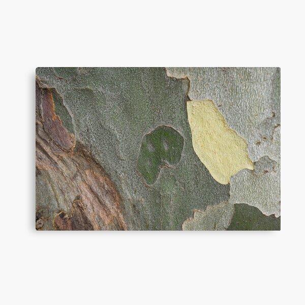 Beautiful Sycamore Hues Canvas Print